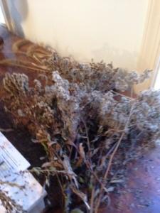 Milkweed pods, sweetgum bombs, echinachea heads,